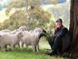 Alison and part of her flock at the Boolarra Sth farm, image courtesy of The Weekly Times
